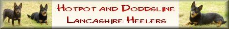 THE definitive web site for information and photographs of Lancashire Heelers